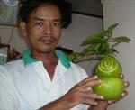 Hàng nghìn trái bưởi 'độc' giá một triệu đồng chờ Tết