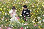 Du xuân vườn hoa Hà Nội