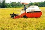 Nông dân đồng bằng sông Cửu Long: Một năm được mùa, được giá