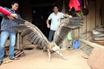 Cận cảnh con chim lạ bên hồ sông Đà