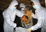 Bắc Kạn khẩn trương dập dịch cúm gia cầm