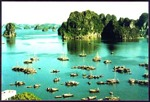Ăn cá... chục triệu đồng ở Hạ Long