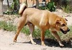 7 người chết vì chó dại cắn ở Sơn La