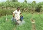 Tìm hướng phát triển bền vững đặc sản hành chăm Lạc Sơn