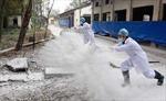 Dịch cúm gia cầm có thể còn diễn biến phức tạp