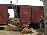 Tạm giữ gần 80 khối gỗ quý không đủ thủ tục
