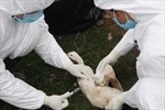 Phát sinh ổ dịch cúm gia cầm mới ở Bắc Ninh