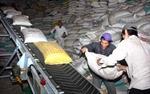 Xuất khẩu gạo có tín hiệu khởi sắc