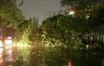 Đồng Nai thiệt hại nặng do cơn bão bất thường