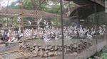 Nỗi thống khổ của động vật tại sở thú