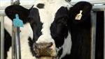Các thị trường chủ chốt vẫn nhập khẩu thịt bò Mỹ
