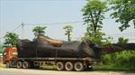 Tạm giữ 4 xe container chở cây cổ thụ hàng trăm tuổi