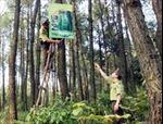 Cấp bách ứng phó với nguy cơ cháy rừng trên diện rộng