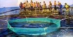 Trường sa trong lòng Tổ quốc-Kỳ 4: Cá lồng Trường Sa