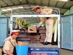 Ngụy trang là xe chở bò để vận chuyển gỗ quý hiếm