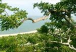 VQG Núi Chúa - hệ sinh thái khô hạn đặc trưng Đông Nam Á