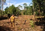 Quan xã Cửa Cạn bao che cho kẻ phá rừng Phú Quốc?