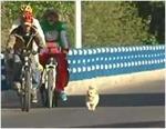 """Chó """"việt dã"""" đi gần 2000 km"""