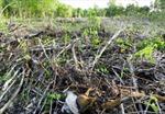 Rừng Phú Quốc bị xâm hại