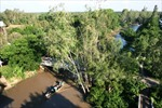 Nhiều điểm du lịch sinh thái ở Đồng Tháp thu hút du khách