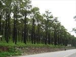 Thu hồi 400 ha đất lấn chiếm trái phép ở Bình Phước