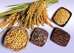 Giá lương thực giảm mạnh nhất trong 2 năm qua