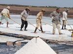 Sản xuất muối chất lượng cao theo công nghệ phơi nước