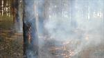 Đắc Lăk: bức tử hàng trăm ha rừng thông phòng hộ
