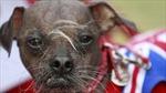 Cún xấu xí nhất thế giới năm 2012
