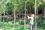 Đua nhau chiếm rừng làm rẫy