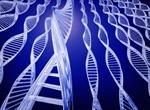 Giải mã gen người VN- giải pháp cải tạo giống nòi