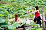 Phong trào chụp ảnh với hoa sen: Tìm lại một nét xưa