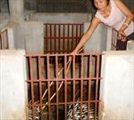 Quảng Bình: Thành công từ nuôi nhím