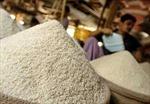 Indonesia không nhập khẩu gạo trong năm nay