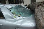 Cành cơm nguội đè nát đuôi xe Mazda