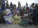 50 triệu người Bắc Phi nguy cơ đói vì.... châu chấu