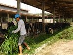 'Truân chuyên' nông sản - Bài 1: Bị đội giá qua nhiều tầng nấc