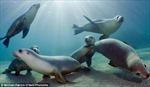 Những bức ảnh 'độc' về hải cẩu ở dưới nước