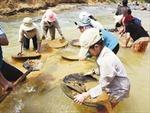 Đào đãi vàng trái phép đe dọa thủy điện sông Ba Hạ
