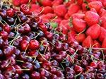 Mỹ Tho giải thích vụ 'cấm trái cây ngoại'
