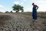 Ngăn chặn khủng hoảng lương thực - Lợi bất cập hại