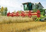 Giá nông sản thế giới tăng