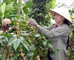 Việt Nam là nước xuất khẩu cà phê số một thế giới