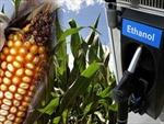 Nhiên liệu sinh học đe dọa an ninh lương thực