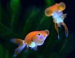 'Bể cá nghệ thuật' lung linh sắc màu ở Nhật