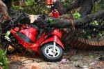 Chùm ảnh bão quật đổ một loạt cây ở Hà Nội