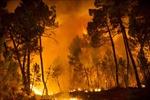 Hàng trăm nghìn hécta rừng ở Tây Ban Nha bị  thiêu trụi