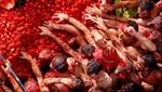 'Cuộc chiến' cà chua lớn nhất thế giới tại Valencia