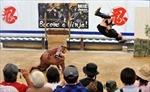 Chuyện về ninja cuối cùng của Nhật Bản