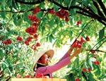 Thành lập bệnh xá 'chữa bệnh' cho cây ăn trái